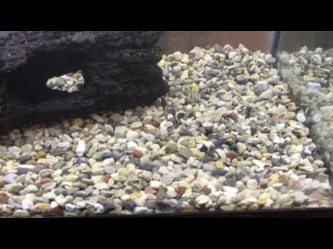 How to get SUPER CHEAP substrate for your aquarium!