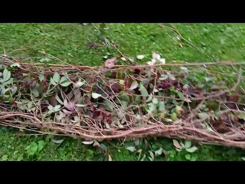 Poison Oak & Tree Removal