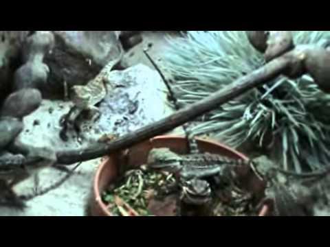 Camo's Reptiles Videos