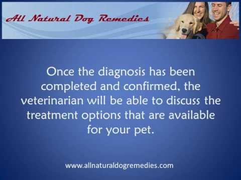 Symptoms of Canine Diabetes