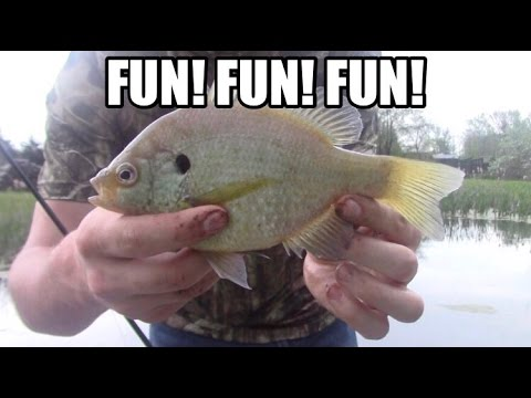 Catching FAT Pond Bluegill! (CHECK IT OUT)