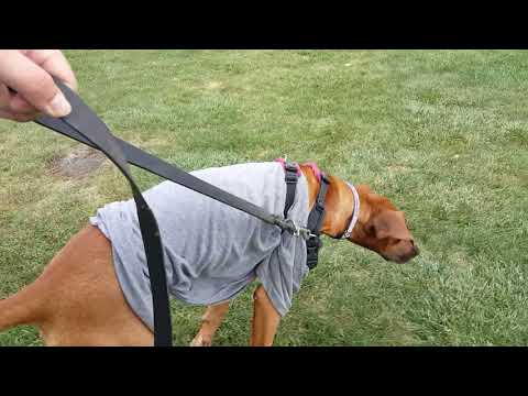 2017.10.07 - Kai Walking Training Instructions