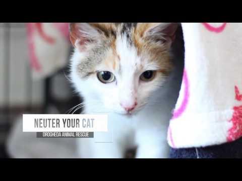 Kitten Season, How Can You Help?