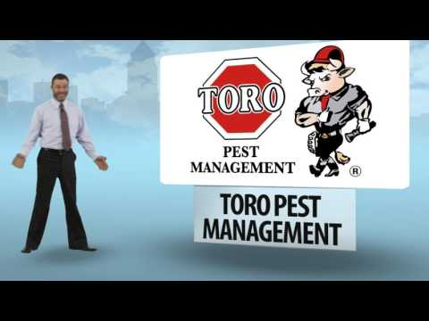 Pest Problem Solution in South Florida