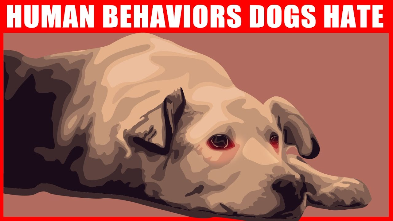 Human Behaviors that Dogs Hate and Wish You Wouldn't Do
