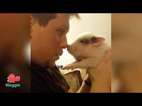 Pet Breakdown: Pigs 🐷🐷 | Are pigs the best pet?