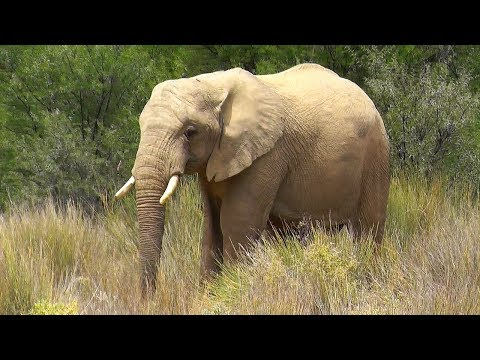 South Africa's magnificent wildlife