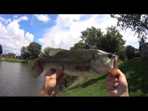 Fishing Illinois - Summer Bass Fishing 2014
