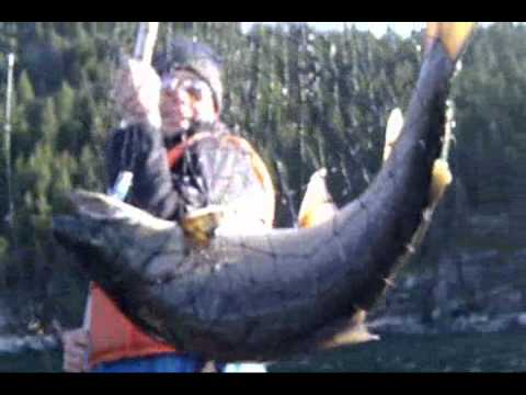 Extreme huge monster big bull trout fishing