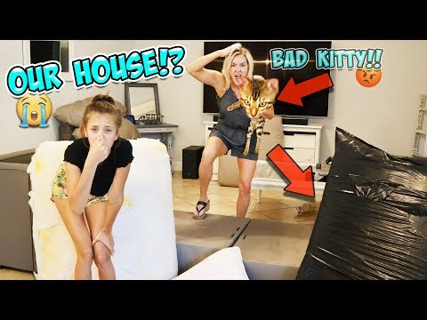 WILD BENGAL CAT RUINED OUR HOUSE!! 😭