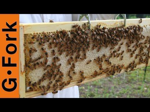 How to Assemble BeeHive Frames - Beekeeping 101 - GardenFork