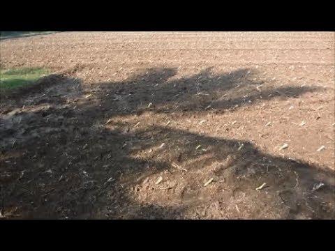 Co4-  Napier CumbuCross Fodder Grass