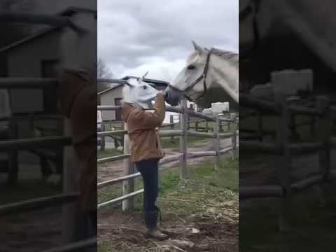 Woman takes off horse mask, scares horse!