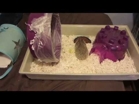 Hedgehog Care Tips: Keeping a Clean Wheel
