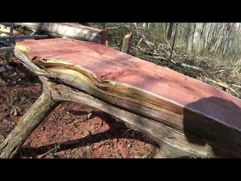MAKEING A BENCH FORM A CEDAR TREE.