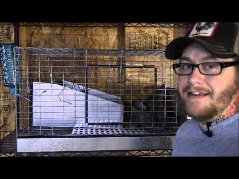 Raising meat rabbits: Rabbit cage wire issue