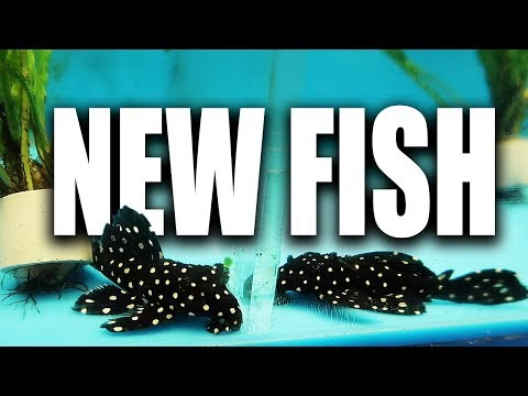 I bought MORE FISH... By accident! lol (aquarium store tour included)