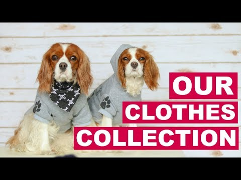 OUR CLOTHES COLLECTION | Dog Clothing Accessories Bandanas | Herky The Cavalier