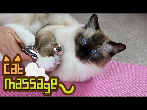 The Cat Massage (ReFa Carat)