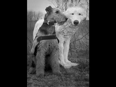 Sharpen your Dogs, Get Unpredictable!