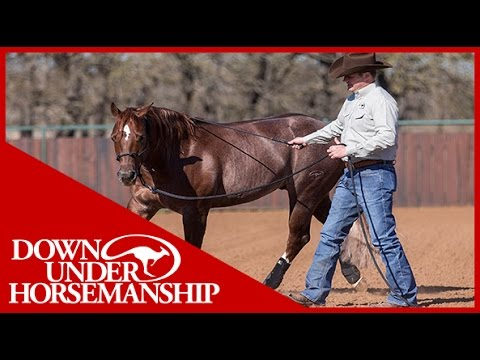 Clinton Anderson: Deciding What Size of Support Boot to Get Your Horse - Downunder Horsemanship