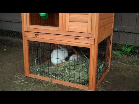 Farm Update #1 :  The new rabbit hutch