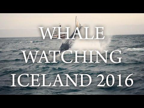 WHALE WATCHING IN ICELAND, HUSAVIK