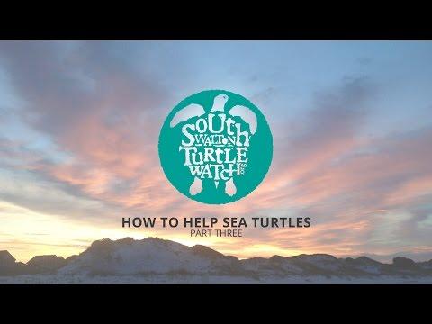 South Walton Turtle Watch :: How to Help Sea Turtles Part Three