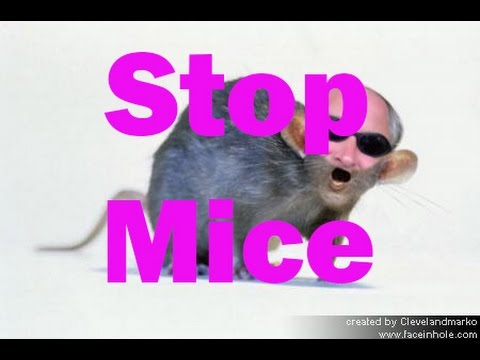 How to find a mouse: mice in my home, How to stop mice