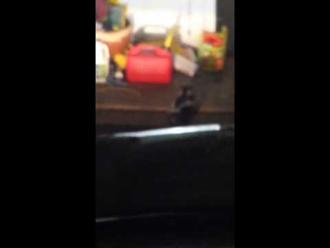 Skunk in the garage!!!