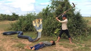 Wow! Amazing children Catches Cobra Snake In Hold Using Bare Hand - How To Catch Snake In Cambodia