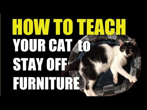 Stop Cats From Scratching Furniture-How To Teach Your Cat