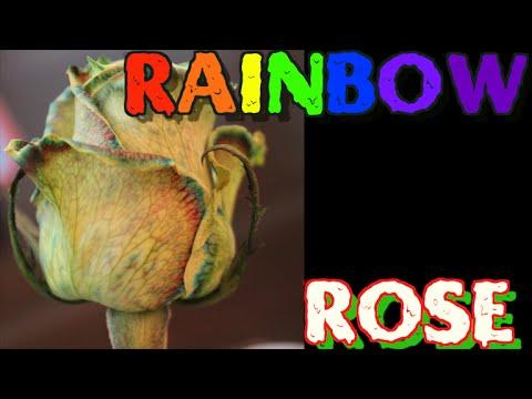 How to Rainbow Rose!