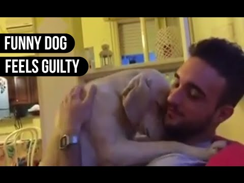 Lovely Dog Feels Guilty || Animals are Awesome