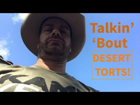 Desert & Arid Loving Tortoises