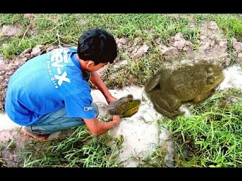 Catch Frog by Using Tools at Night in Cambodia