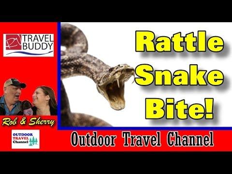 Rattle Snake Bite! Attention Snowbird and RV Pets! | RV Travel Buddy #rattlesnake #rvdanger