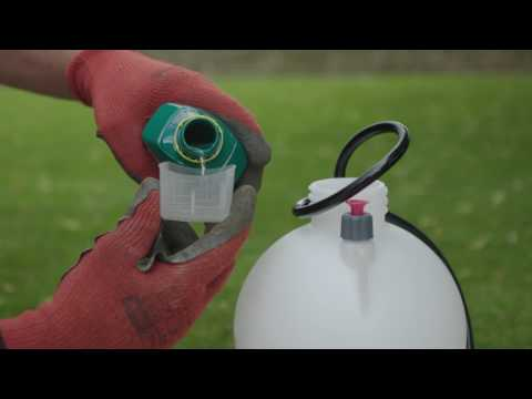 How To Remove Weeds & Moss From Your Lawn - D.I.Y. Advice At Bunnings