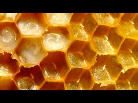 Killer Bee Facts: 9 facts about Africanized Honey Bees