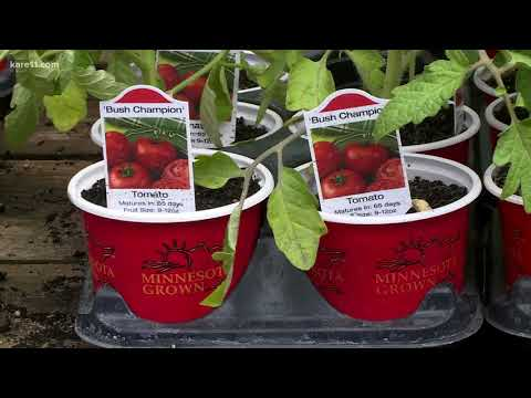 Grow with KARE: New plants to try this season