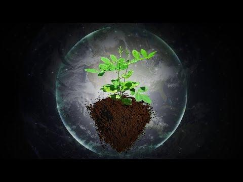 Music for Plants - Music Stimulation for PLANT HEALTH - Brainwave Entrainment