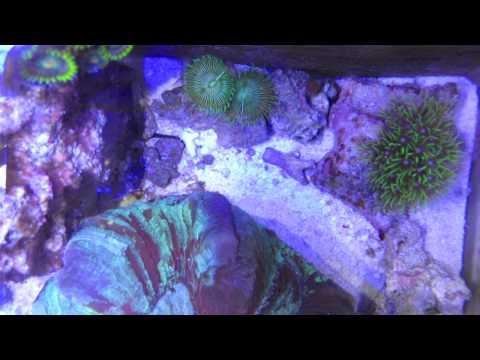 CHDK Worm in Pico Timelapse Aquascape