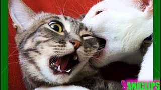 laughing until your belly hurts - FUNNY ANIMALS