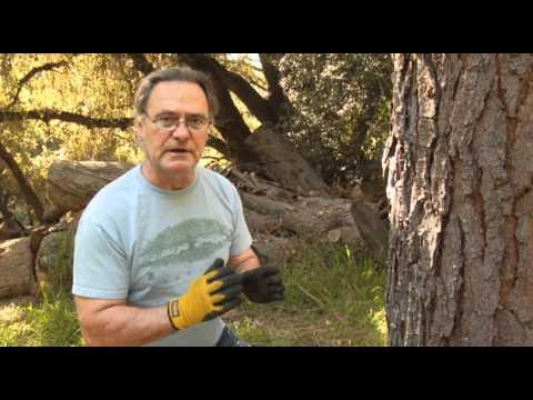 Wood Borer Infestation - Prune Like a Pro