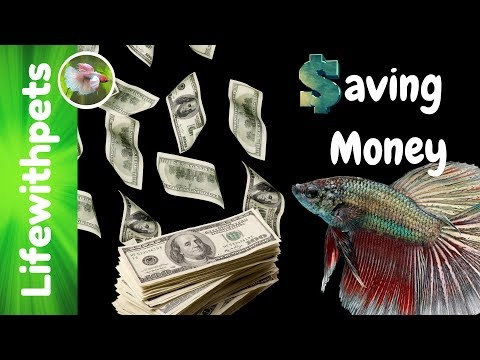 How To Save Money in The Aquarium Hobby
