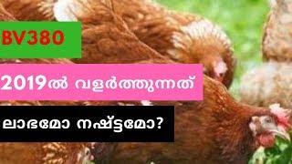 Hi-tech poultry | BV - 380 cage | മുട്ട കൃഷി | Poultry