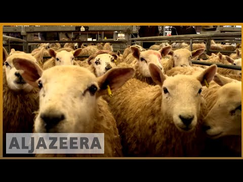 🇬🇧 UK farmers concerned about future post-Brexit | Al Jazeera English