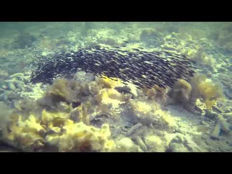 school of fish @ Moalboal