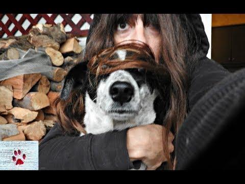 Bonnie the strange - stray dog number 2.500.372