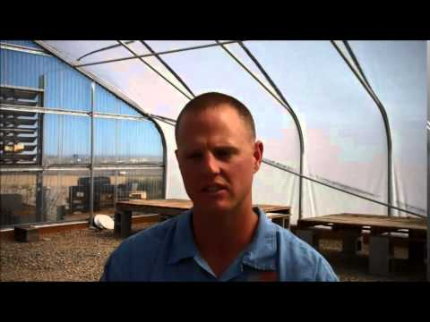 Growing sagebrush within Snake River Correctional Institution, Oregon Department of Corrections